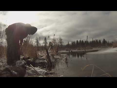 Spring Beaver Trapping April 17 CH31 setting and checking