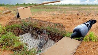 Bird Trap Technology - bird trap machine (part 2)