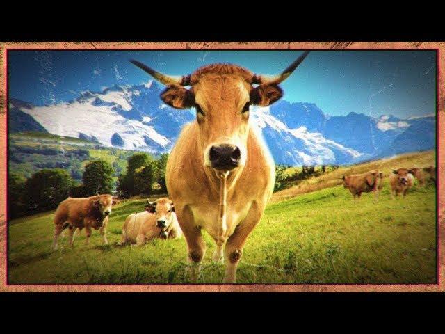 Nos belles montagnes françaises... - DK#6