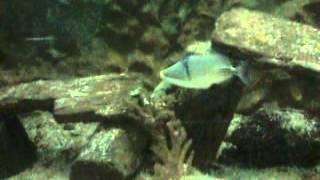 Aquarium متحف الاحياء المائيه 2 Thumbnail