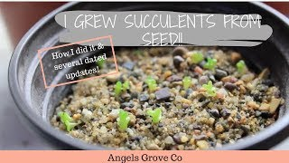 How to Grow Succulents From Seeds🌵 // Angels Grove Co