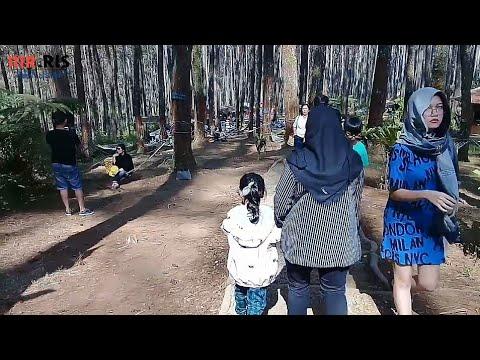 wisata-hutan-pinus-(tangkuban-parahu---pal16)