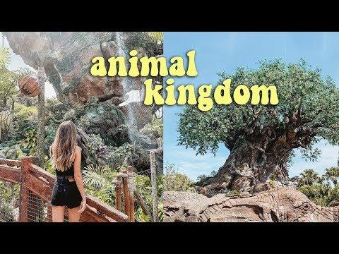 ANOTHER DISNEY WORLD VLOG (animal kingdom!!) thumbnail
