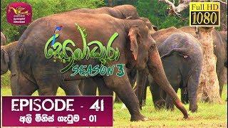 Sobadhara - Sri Lanka Wildlife Documentary | 2020-01-03 | Elephant-Human Conflict (අලි මිනිස් ගැටුම) Thumbnail