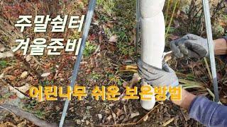 [겨울준비] 지붕낙엽 치우기 | 어린나무 보온방법 | …