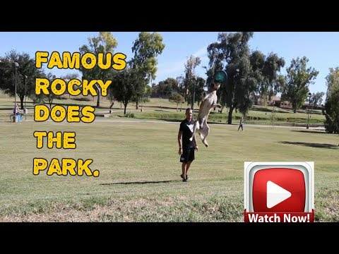 Rocky Famous Malinois Dog -What is possible. Wow!