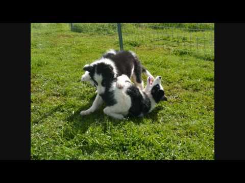 Puppies!  Puppy Kaiya