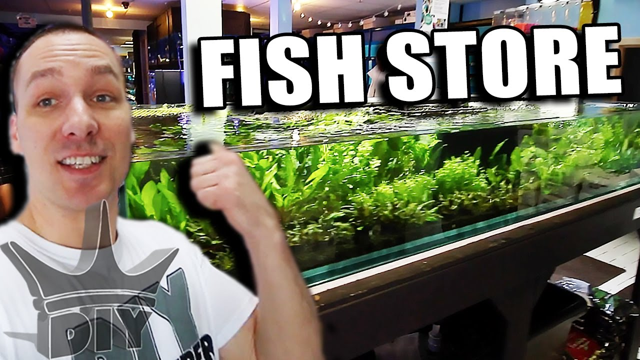 My local aquarium fish store tour update youtube for Local fish store