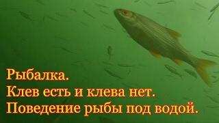 Рыбалка. Клев есть и нет. Поведение рыбы под водой.My fishing.