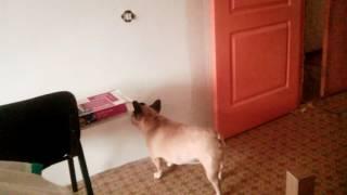 Собака лижет нюхает и ковыряет розетку  но её долбануло током смотреть доконца