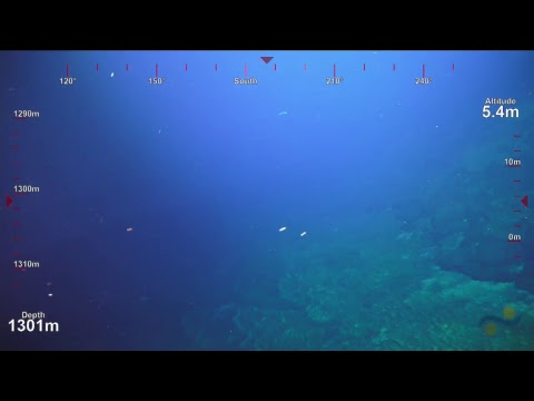 ROV SuBastian Dive 103- West Mata Upper East Rift - Underwater Fire