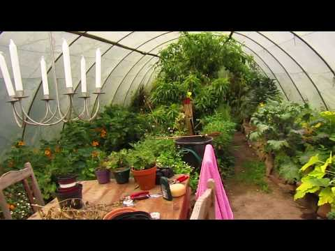 Permaculture Peaches and Grapes in Ireland in the Goddess Gardens