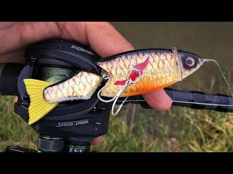 Injured Bait Fish | One Day Build To Catch