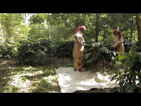 Indian Highlands Vanilla