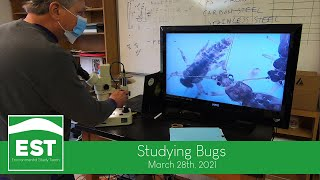 EST - Studying Bugs - March 2021