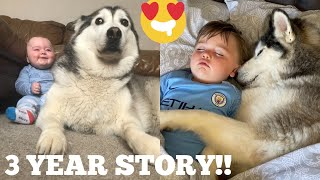 The 3 Year Journey Of My Baby & Husky Becoming Best Friends! [FULL STORY!]