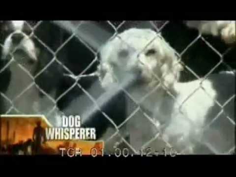 Newport Beach Civic Center Dog Park - PUPPY MILL FEDERAL CANINE TORTURE COUNCIL