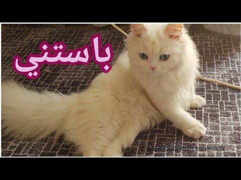 Cutest & Beautiful Cat Ever