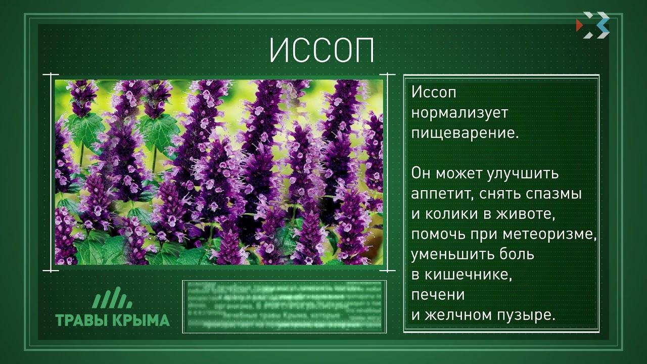 лекарственные травы крыма фото и описание своем микроблоге бузова