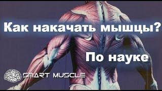 Как накачать мышцы. научный подход
