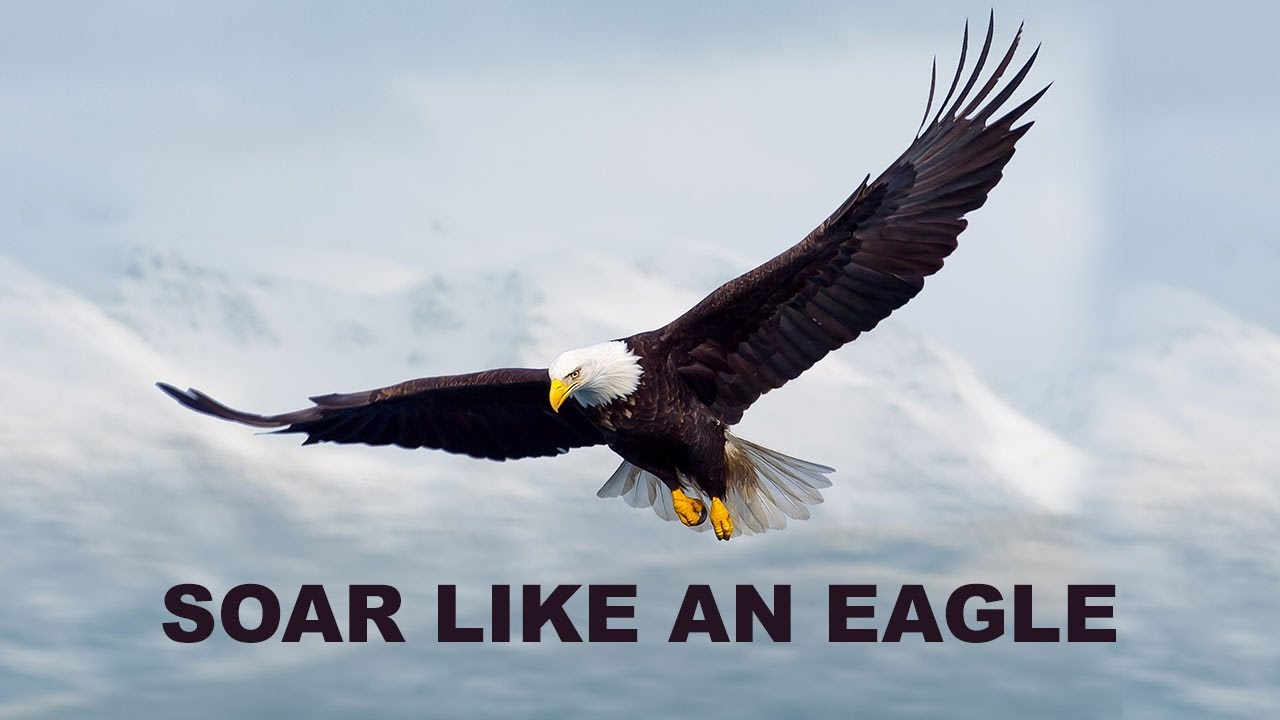 Image result for ARE YOU SOARING LIKE AN EAGLE?