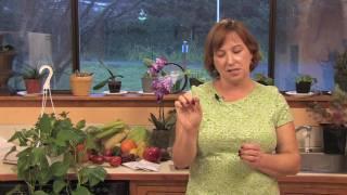 Gardening & Plant Care : How to Prune Hydrangeas