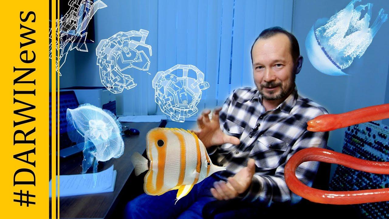 Сухопутная рыба, исследования сумеречной зоны, робот-оригами, самая редкая награда #DARWINews