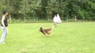 Training Auf Dem Hundeplatz