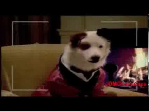 Download Dog With A Blog - Stan Makes His Mark promo - Season 2 - episode 4 - G Hannelius