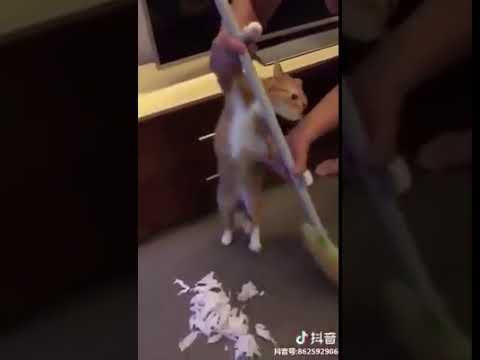 Cat Series: A cat is sweeping floor