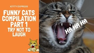 funny cats compilation part 1 (TRY NOT TO LAUGH)