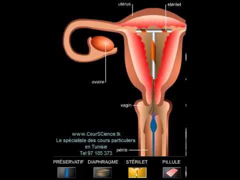 hqdefault - Cycle menstruel et moyen de contraception