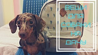 собираю рюкзак на дачу для собаки\ вещи моей собаки