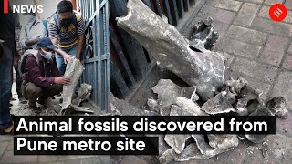 Animal fossils discovered from Pune metro construction site
