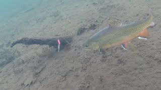 Ice Fishing Brook Trout - Under Water View!