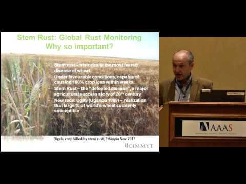 Building Plant Pathogen Surveillance Networks in Sub-Saharan Africa - Dave Hodson