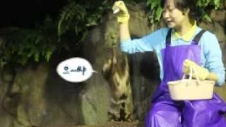 [부산아쿠아리움] 수달 피딩쇼