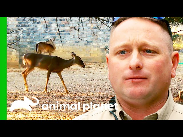 Deer Poacher Is Tracked Down By Game Warden | Lone Star Law
