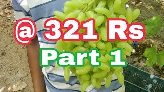 भाग 1 शेतकरी दिलीप माने द्राक्ष बागातदार. 24 ऑगस्ट फळछाटणी मार्केटिंग 10 डिसेंबर 2018 पेटी 321
