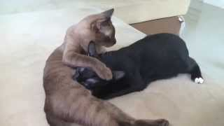 Female Cat Feeding Empty Milk To Her Adopted Child