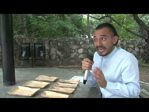 Chiapaneco Crea Platos Desechables A Base De Hojas De Maíz