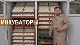 Самодельный инкубатор на 4000 яиц. Китайские фермерские инкубаторы