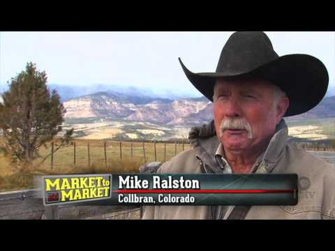 Cattle buyer works to build herds out West
