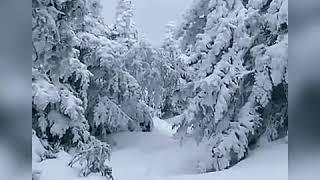 Сибирская природа,  тайга,  зимний лес