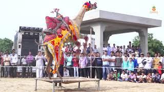 New Rajasthani camel and Girl dance 2018 | New dj song 2018 | Marwadi dance Video