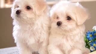 Картинки собачки