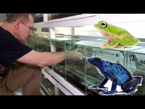 Как живут лягушки? Содержание лягушек. Часть 1.