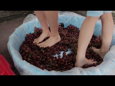 Pressing Grapes The Ancient Way