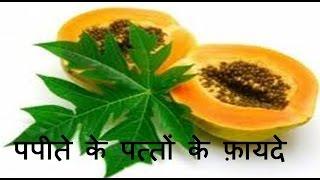 पपीते के पत्तों के फ़ायदे | Health Benefits of papaya leaves for weight loss, skin & Hair