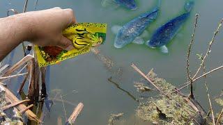 Вся рыба клюёт на это Копеечное средство